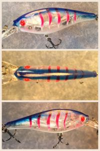 Blue Glass Tiger With Fiber-Eyes Berkley Flicker Shad 5