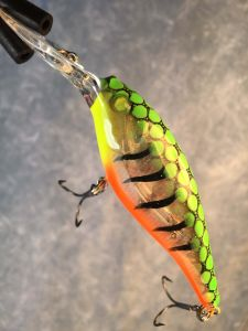 Fire Glass Tiger With Fiber Eyes Berkley Flicker Shad
